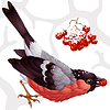 Bullfinch and ashberry | Stock Vector Graphics
