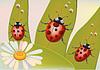 Vector clipart: beetles
