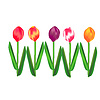 Vektor Cliparts: Tulpen Set