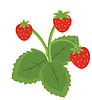 Vector clipart: Strawberry fruits with leaves