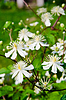 Flowers on green background | Stock Foto