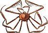 Vector clipart: crab