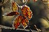 Autumn vine leaf as 3D | Stock Foto