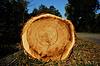 Zwalone drzewo | Stock Foto