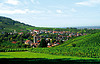 Baden-Baden`s vineyards in Neuweier | Stock Foto