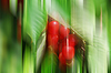 Red cherries on tree | Stock Foto