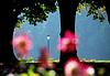 바덴 - 바덴의 달리아 공원 | Stock Foto