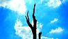 ID 3228008 | Dead tree | High resolution stock photo | CLIPARTO