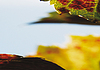 Vine leaf | Stock Foto