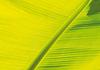 ID 3229354   叶香蕉树   高分辨率照片   CLIPARTO