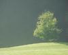 Drzewo w świetle poranka | Stock Foto