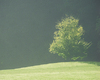 Tree in morning light   Stock Foto
