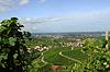 Photo 300 DPI: Vineyards Ortenau