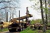 立木加载 | 免版税照片
