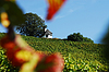 Photo 300 DPI: Refuge in the vineyard
