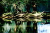 Photo 300 DPI: Forest in the floodplains