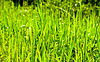 Green grass | Stock Foto