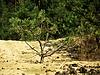 Kleiner Baum im Feld | Stock Photo