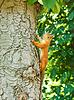 Eichhörnchen auf dem Baum | Stock Photo