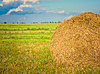 Harvested field with straw bales in summer | Stock Foto