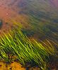 Seaweed | Stock Foto