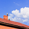 Stork sitting on top of roof | Stock Foto