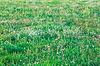 Grass pattern | Stock Foto