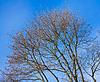 Crone tree | Stock Foto