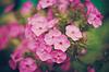Hierba verde y flores de color rosa | Foto de stock