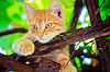 Young kitten sitting on branch | Stock Foto