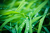 Water drops on fresh green grass | Stock Foto