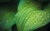 Water drops on fresh green leaf | Stock Foto