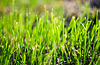 Fresh spring green grass | Stock Foto