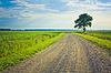 Dusty road with alone tree | Stock Foto