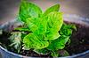Leafes verdes | Foto de stock