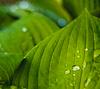 Water drops on fresh green leaf | Stock Foto