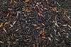 Black tea leaves   Stock Foto