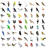 big set of different birds