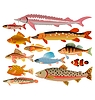 Vector clipart: set of sea and river fishes