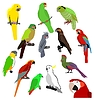 Vector clipart: the set of different kinds of parrots