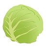 Vector clipart: cabbage stalk
