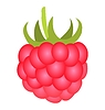 Vector clipart: Ripe raspberry