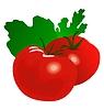 Vektor Cliparts: Tomate