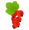 Vector clipart: currants