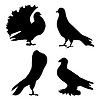 Vector clipart: silhouette of pigeons