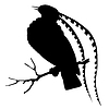 Silhouette des Paradiesvogels