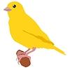 Vector clipart: canary