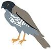 Vector clipart: falcon