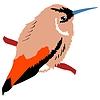 Photo 300 DPI: hummingbird