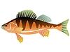 Fish | Stock Vector Graphics